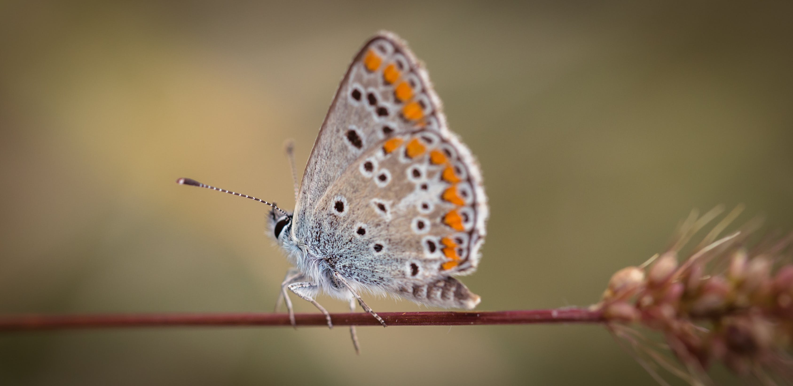 Shallow Focus Photography of Gray and Orange Butterfly