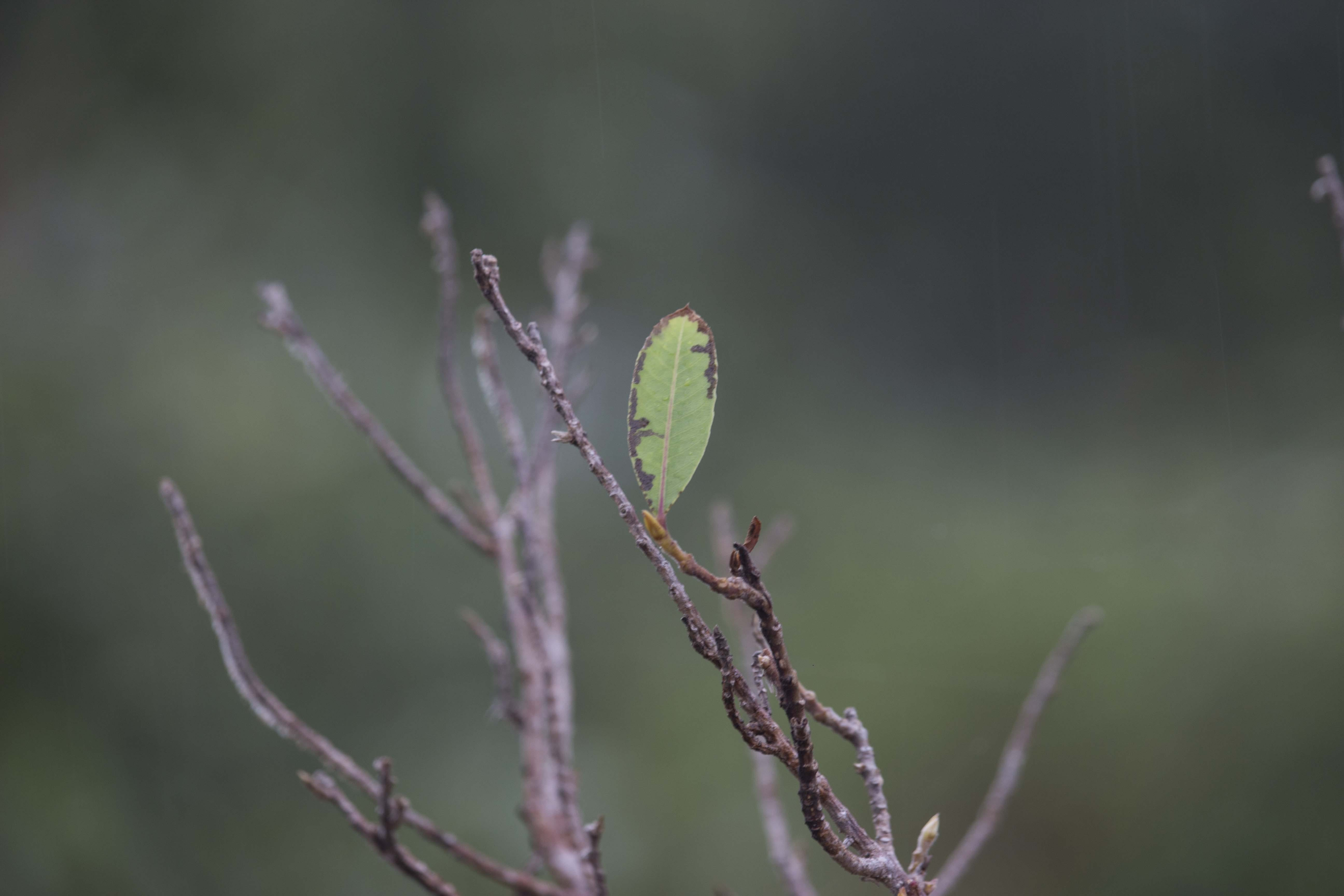 Free stock photo of green