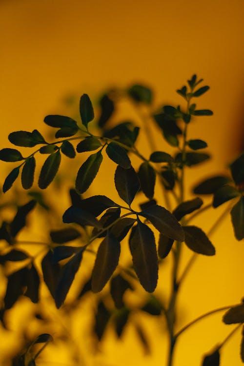 나뭇잎, 성장, 식물, 실루엣의 무료 스톡 사진