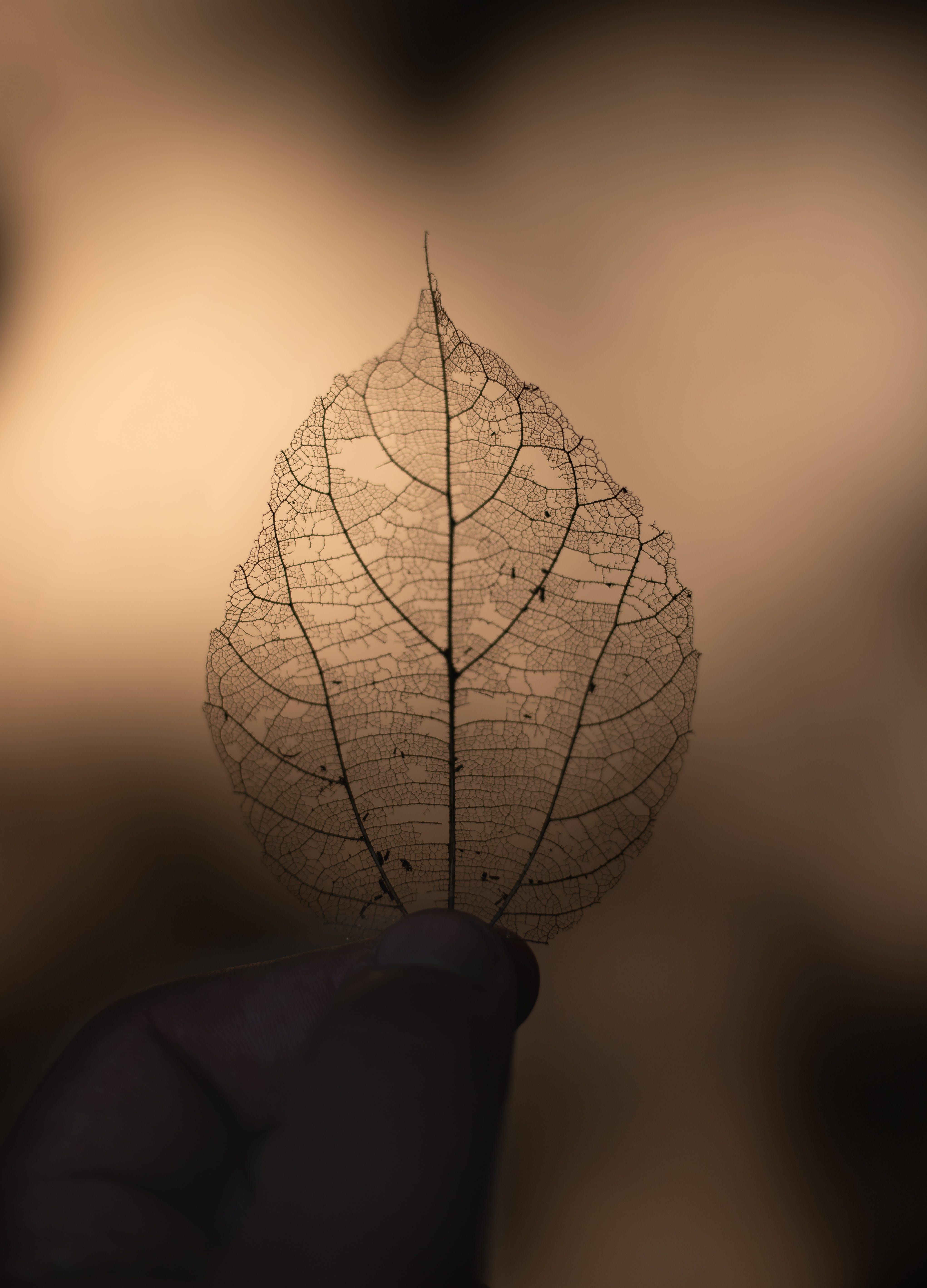 Dry Leaf On Focus Photography