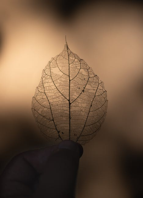 Dry leaf on focus photography