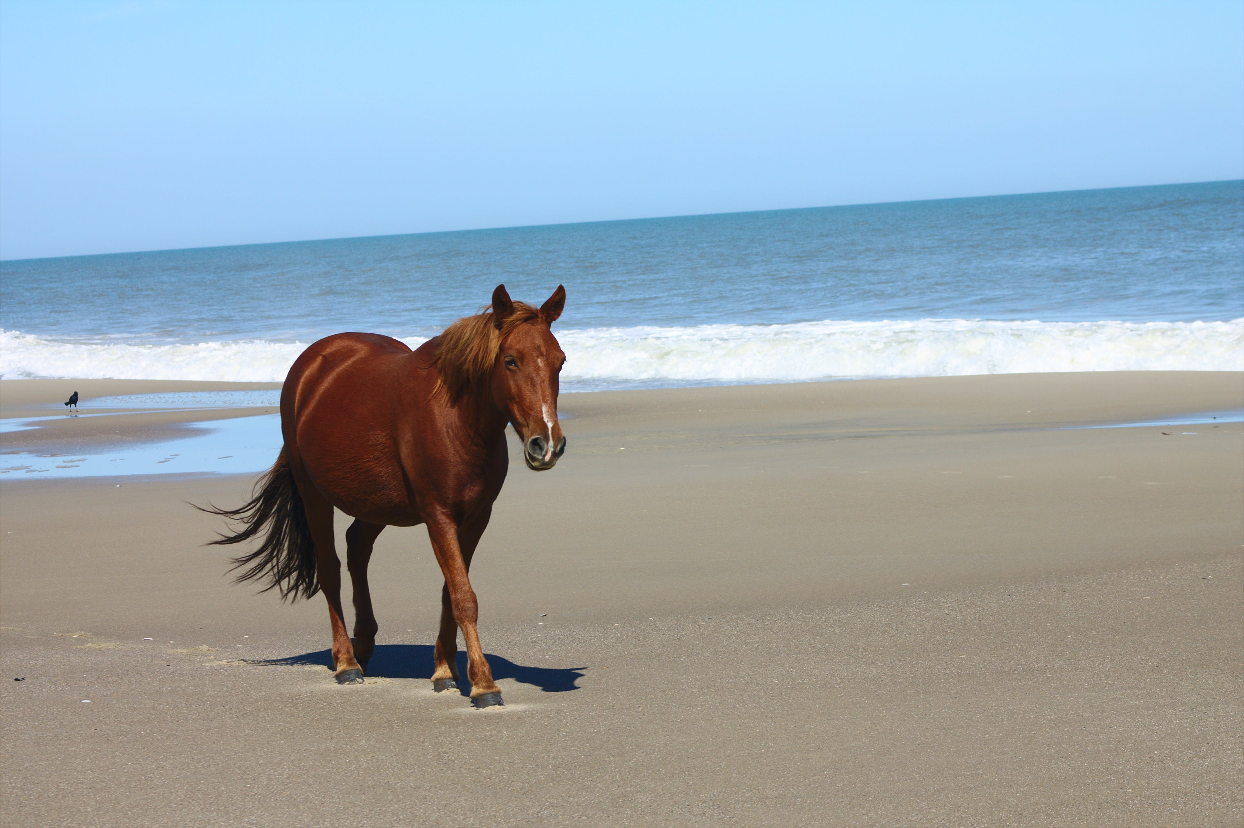 Foto d'estoc gratuïta de aigua, animal, cavall, felicitat