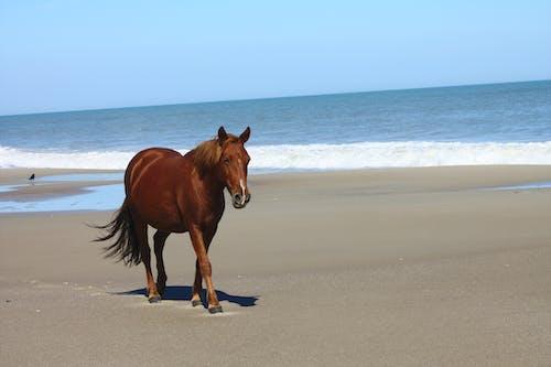 Gratis arkivbilde med dyr, hav, hest, lykke