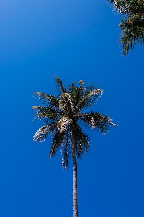 Free stock photo of beach, blue, island, palmtree