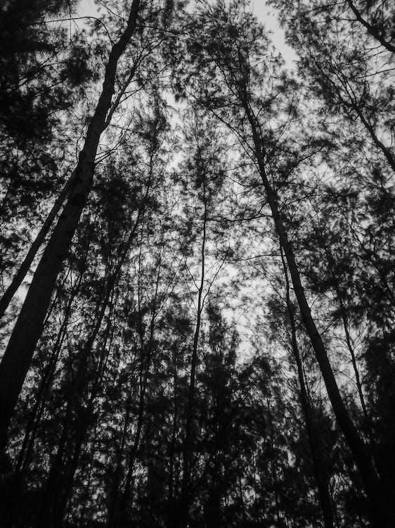 alberi, ambiente, boschi