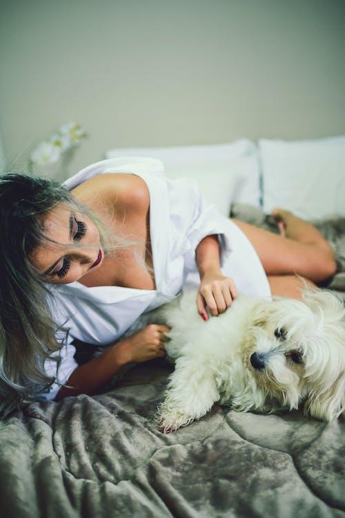 Základová fotografie zdarma na téma domácí mazlíček, ložnice, pes, postel