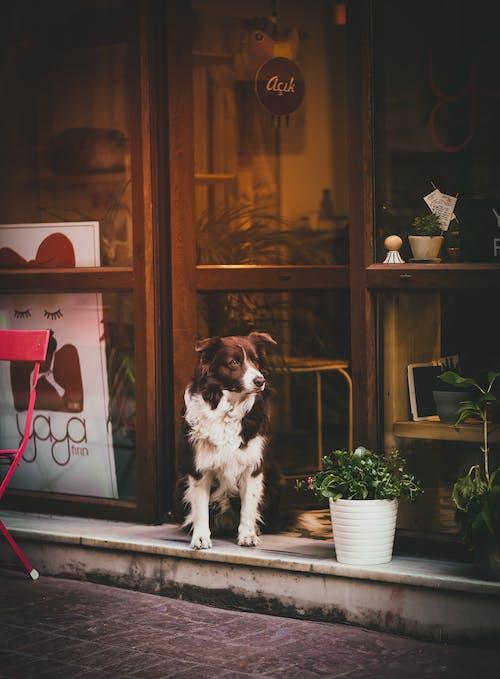 Δωρεάν στοκ φωτογραφιών με #animal #dog #street #photography #canon #like #brown #αναφορά