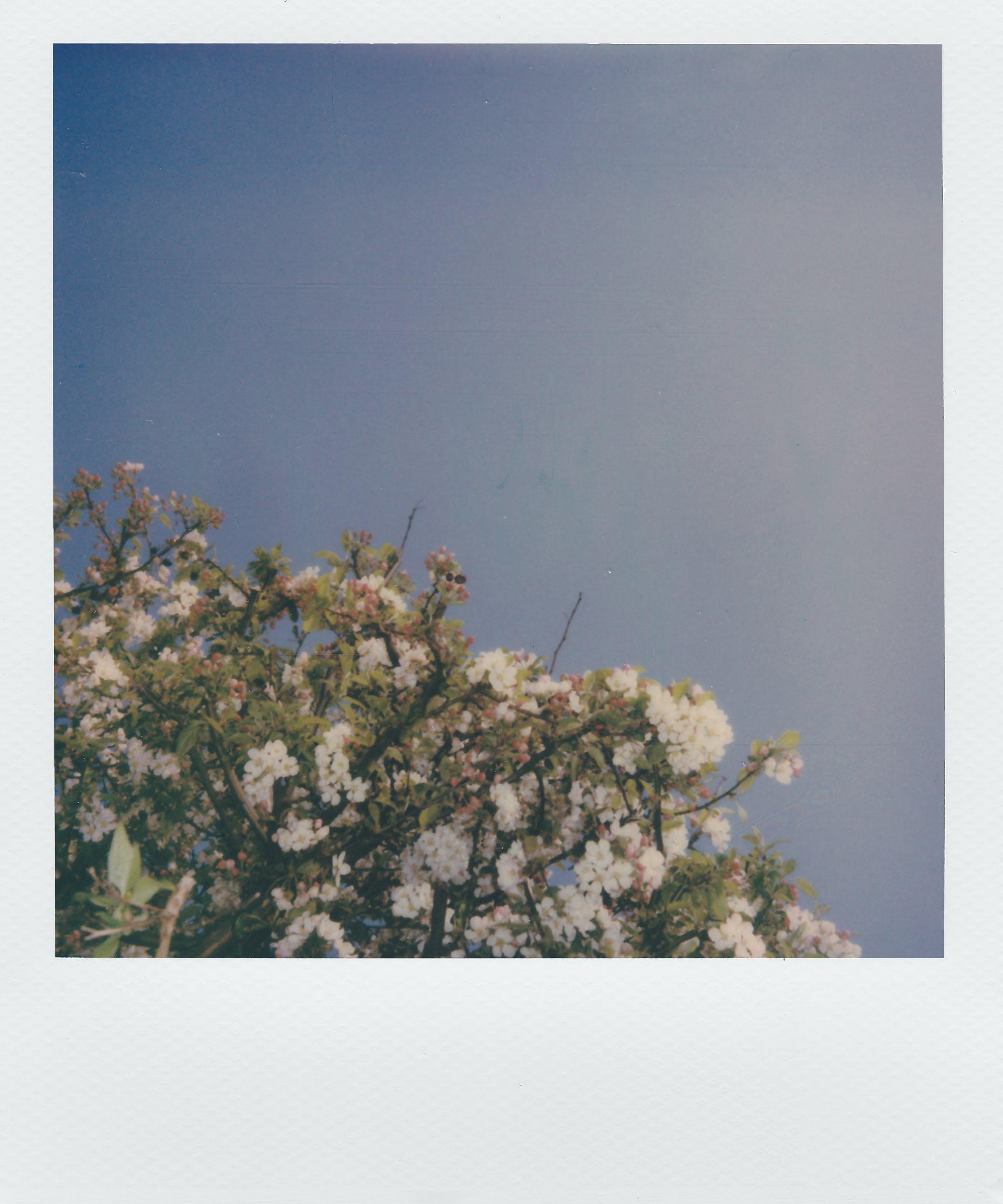 analoge fotografie, blumen, bündel