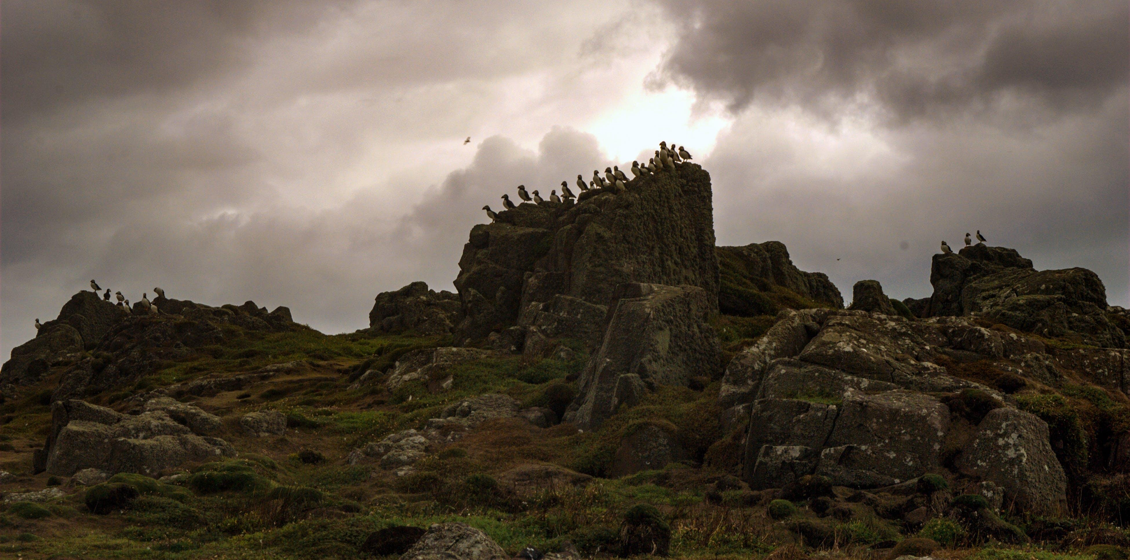 多雨的, 多雲的, 岩石的, 海雀 的 免费素材照片