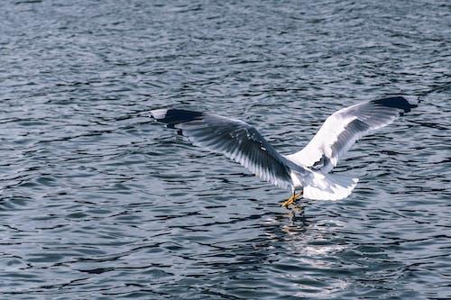 Free stock photo of Baltic Sea, bird, seagull