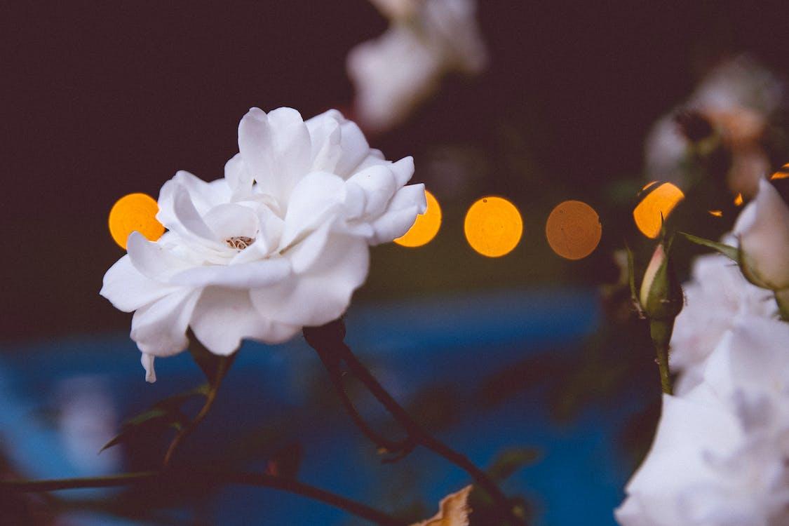 Beyaz çiçek, çiçek, çiçeklenmek