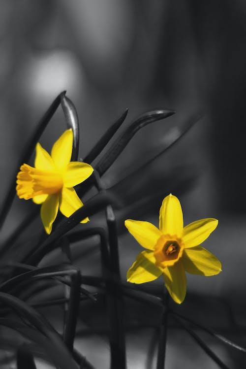 Imagine de stoc gratuită din floare de primăvară, galben, negru