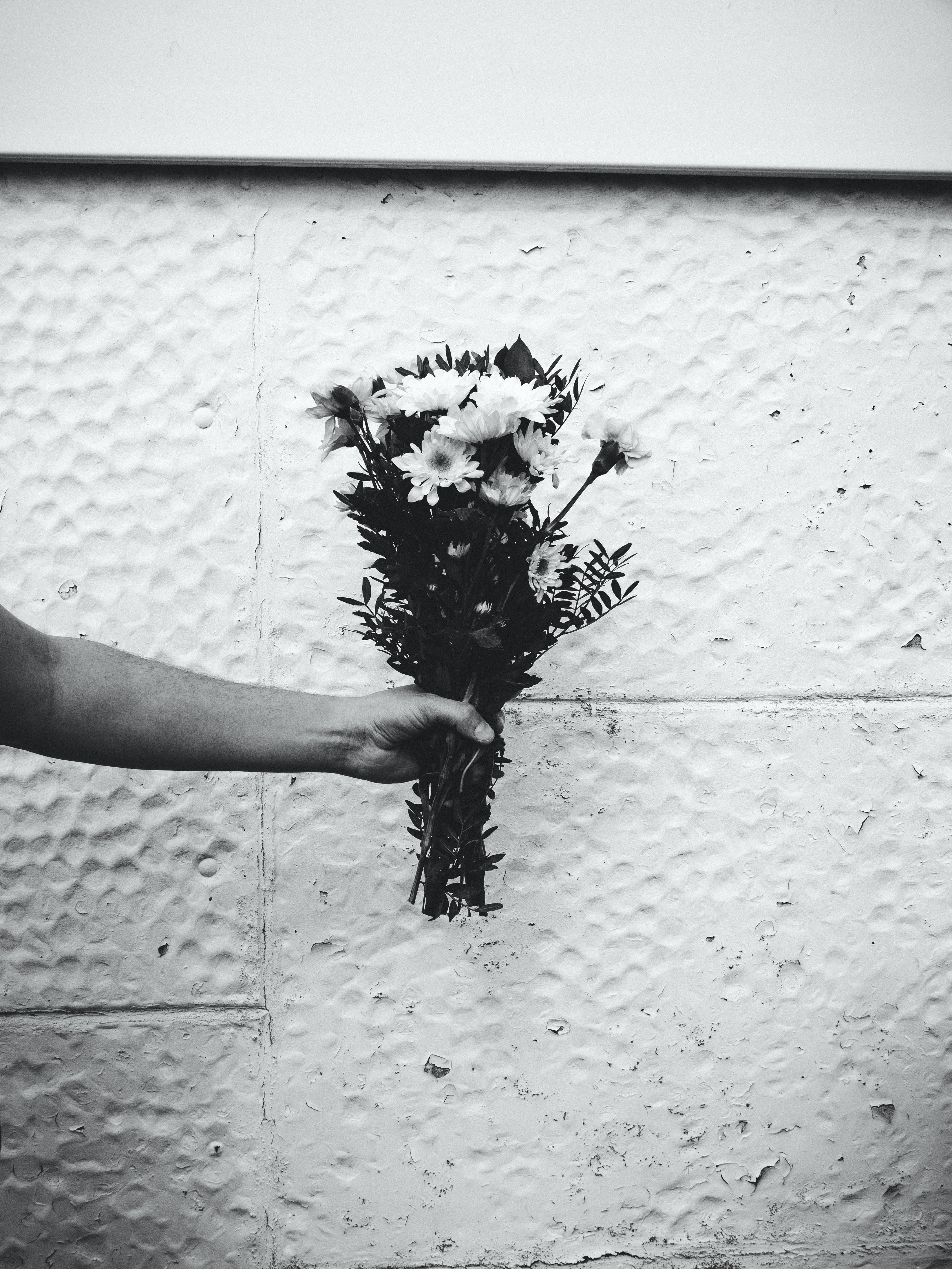 Darmowe zdjęcie z galerii z biały, kwiatowy, kwiaty, mur