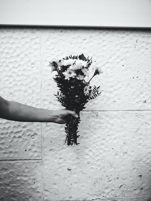 Foto d'estoc gratuïta de blanc, blanc i negre, floral, flors