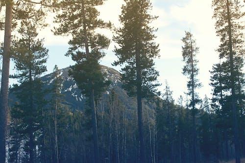 Free stock photo of mountain, trees