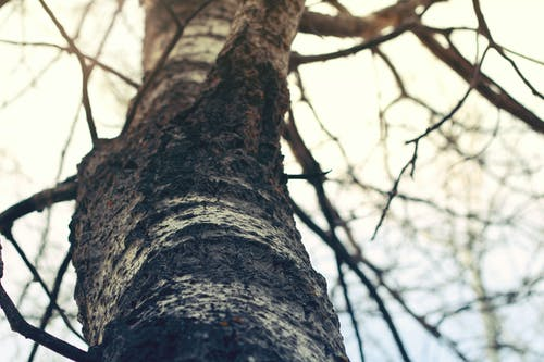 Free stock photo of dead tree