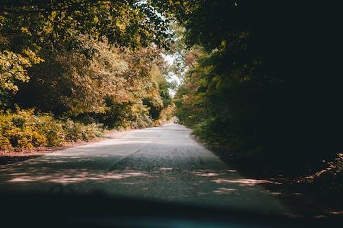 คลังภาพถ่ายฟรี ของ ป่า