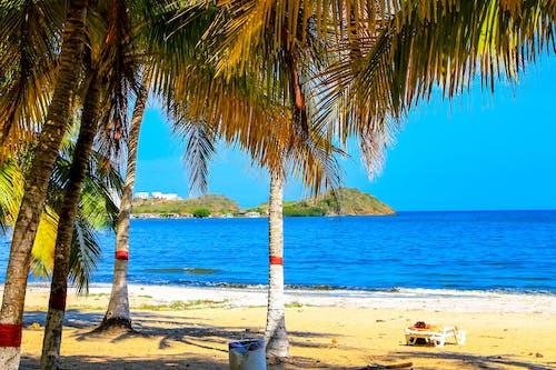 Gratis lagerfoto af hav, palmer, strand, ø