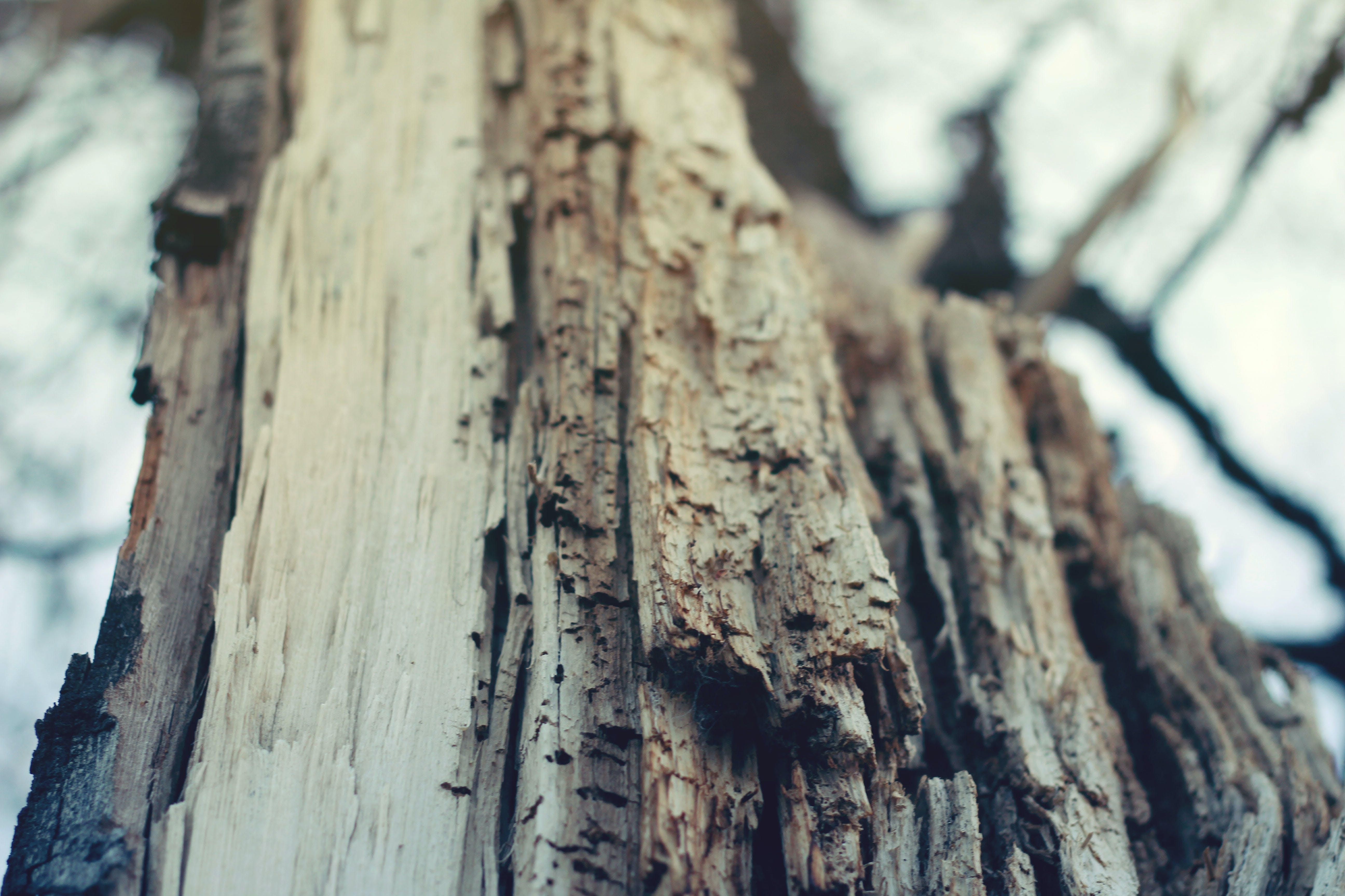 Closeup Photography of Bare Tree