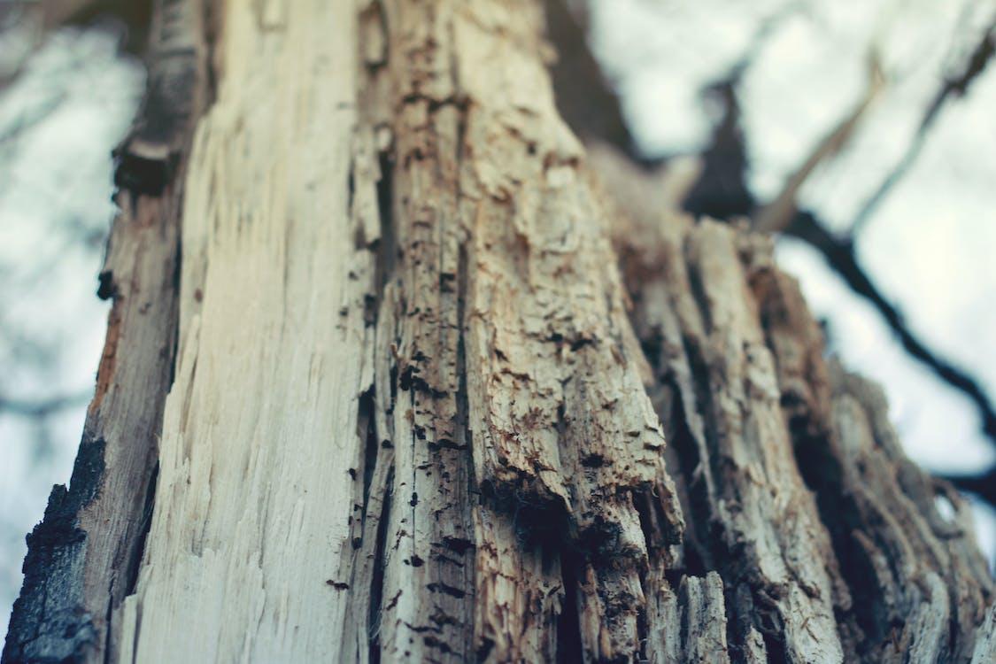 bark, close-up, gø