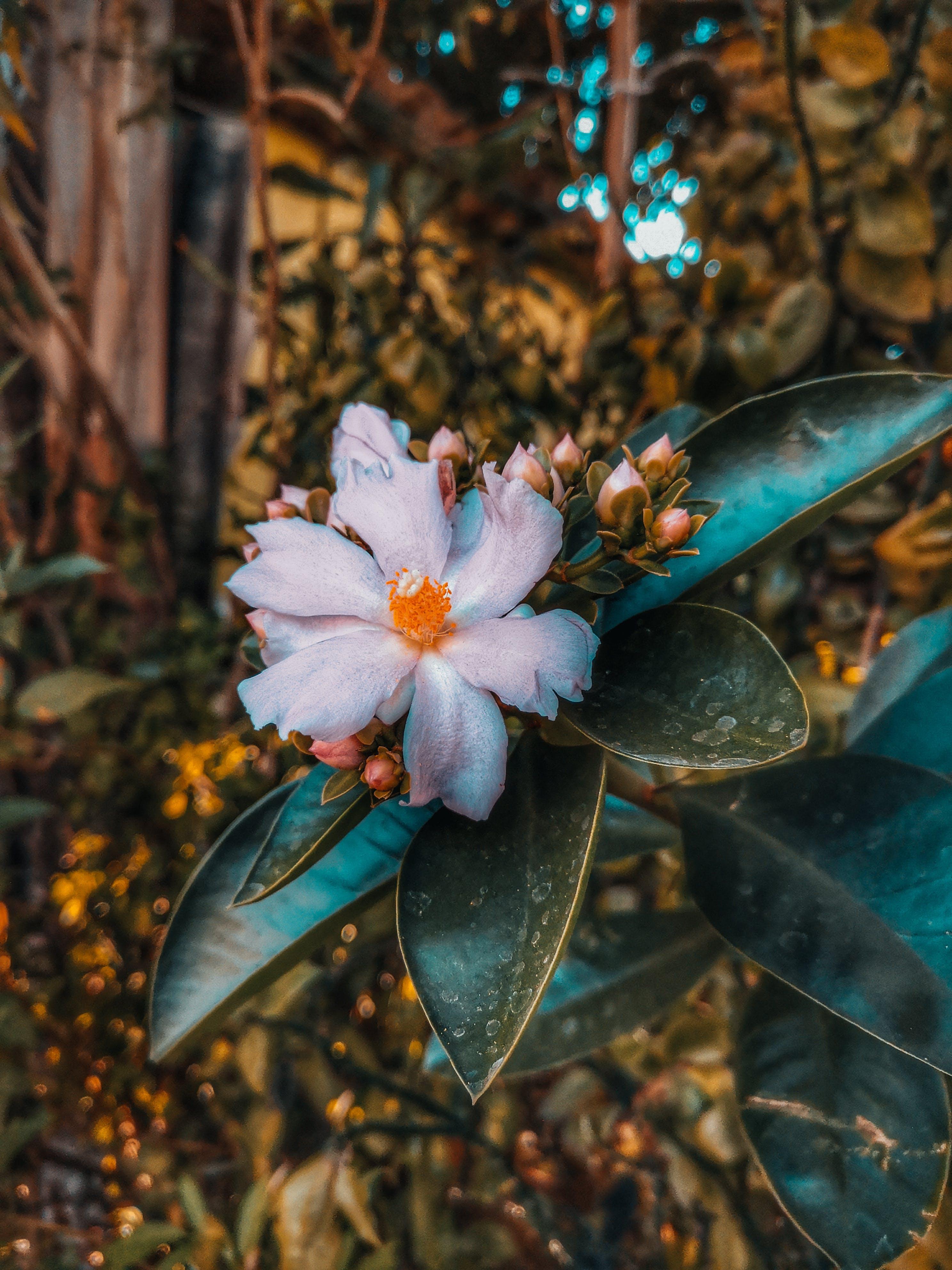 Kostnadsfri bild av #bild, #blomma, #blommor, #huaweiphoto