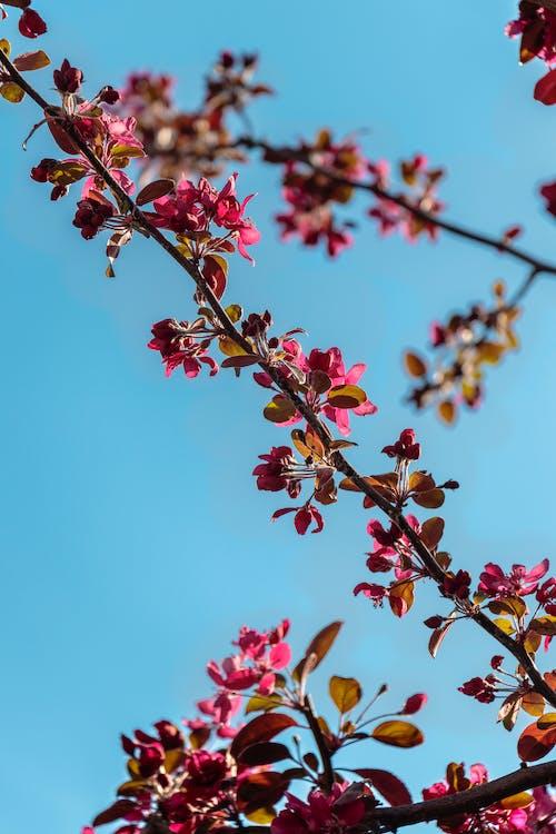 Immagine gratuita di albero, árvore, aveiro, cielo