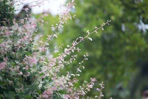 Kostenloses Stock Foto zu baum, blühen, blumen, blüte