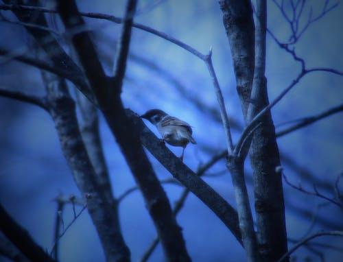 Základová fotografie zdarma na téma ptáci