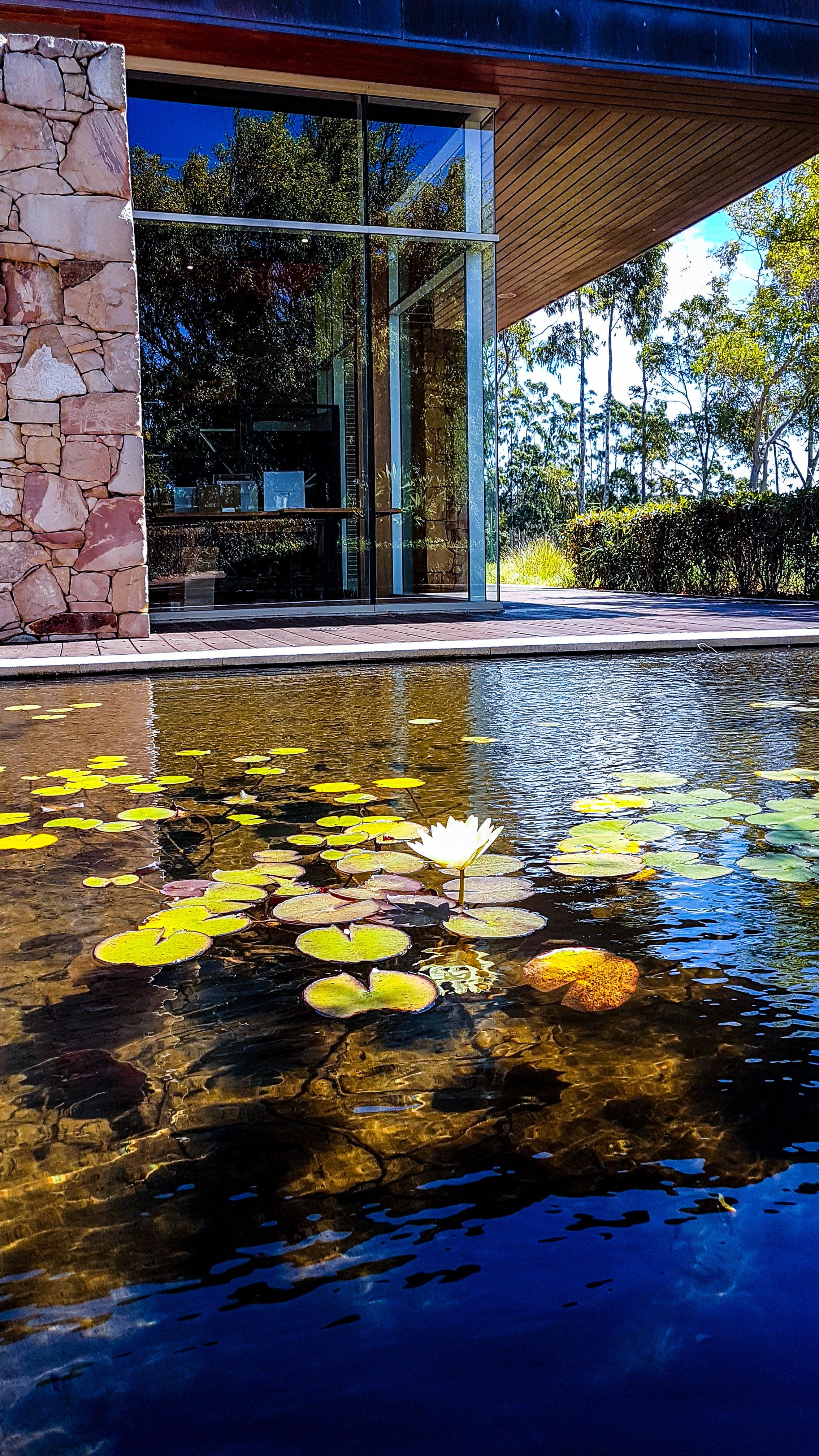 Immagine gratuita di acqua, acqua lilly, acque calme, alberi