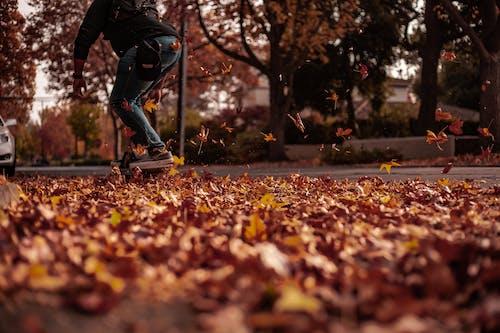 Foto stok gratis bermain skateboard, bersepatu roda, daun gugur, daun jatuh