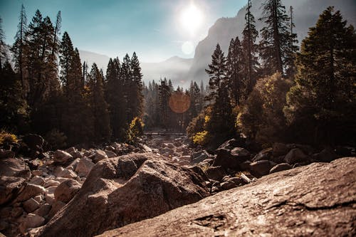 Foto d'estoc gratuïta de arbres, fotografia de natura, medi ambient, muntanya