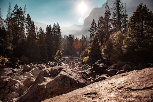 Trees Near Rocks