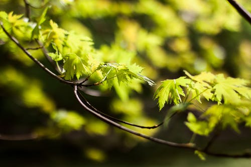 グレイ, 夏, 工場, 木の無料の写真素材