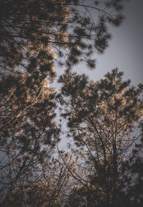 Ilmainen kuvapankkikuva tunnisteilla #lämmetä, #nature, #puu