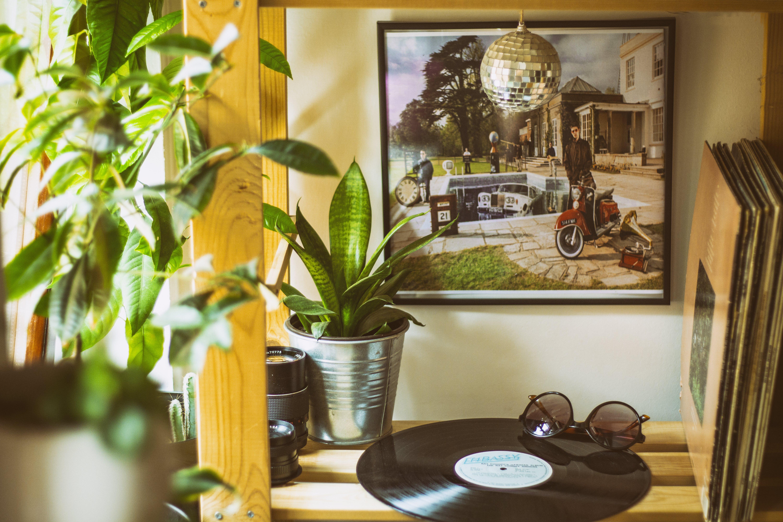 ahşap, bitkiler, dekorasyonlar, dizayn içeren Ücretsiz stok fotoğraf