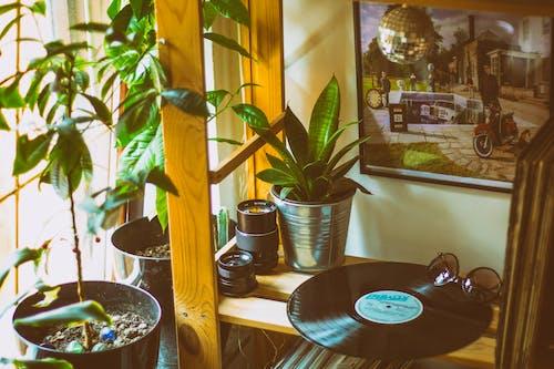 Fotos de stock gratuitas de adentro, bola de disco, casa, clásico