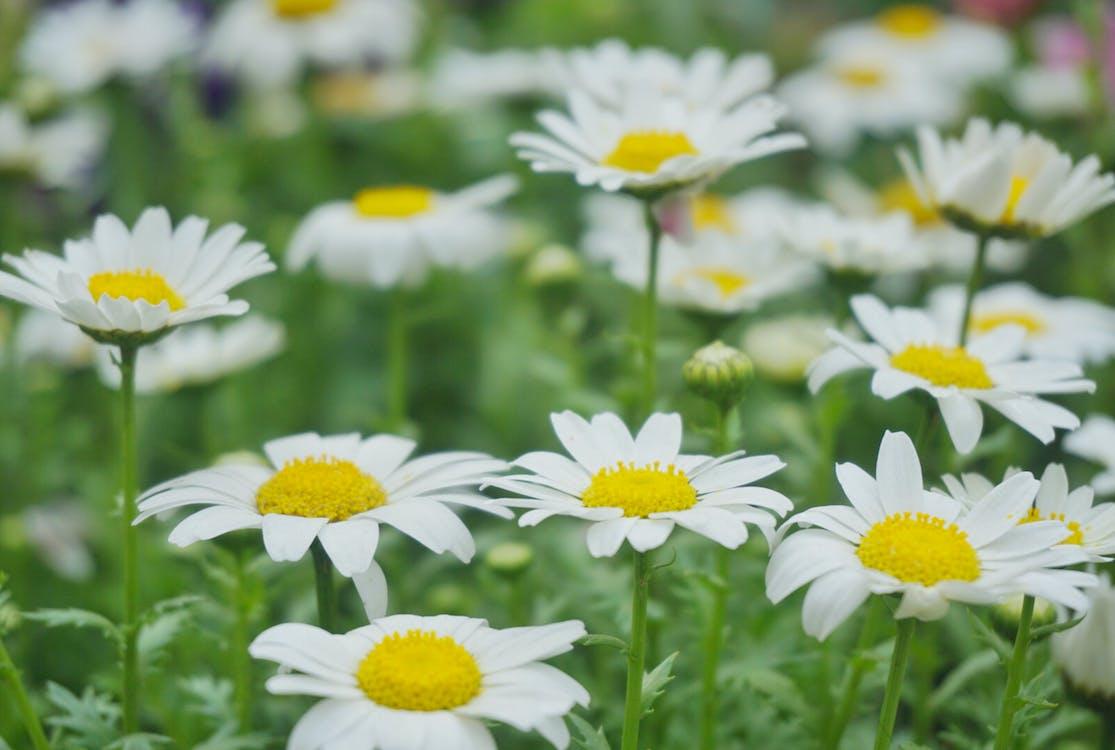 blomma, grön