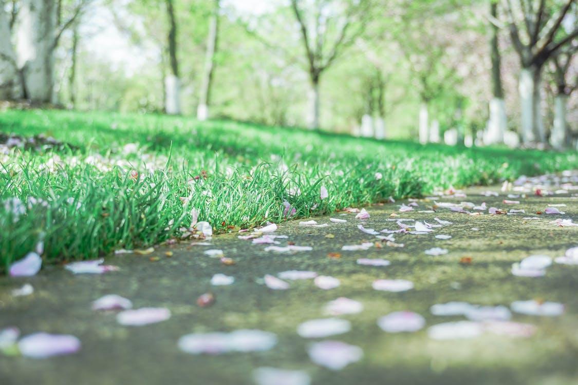 ecológico, grama, verde