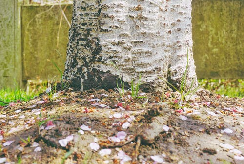 粉紅色, 花瓣 的 免费素材照片