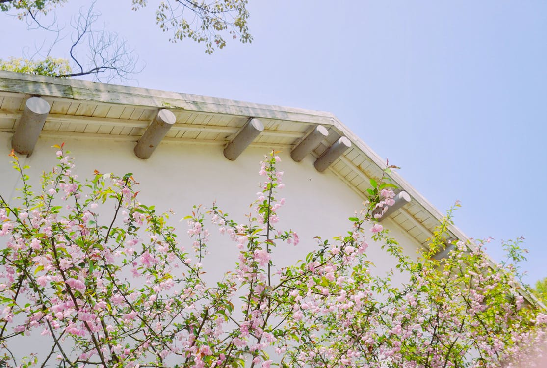 bloem, huis, roze