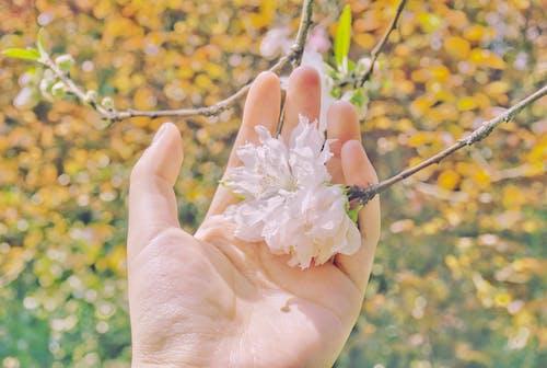 手, 粉紅色, 花, 黃色 的 免费素材照片