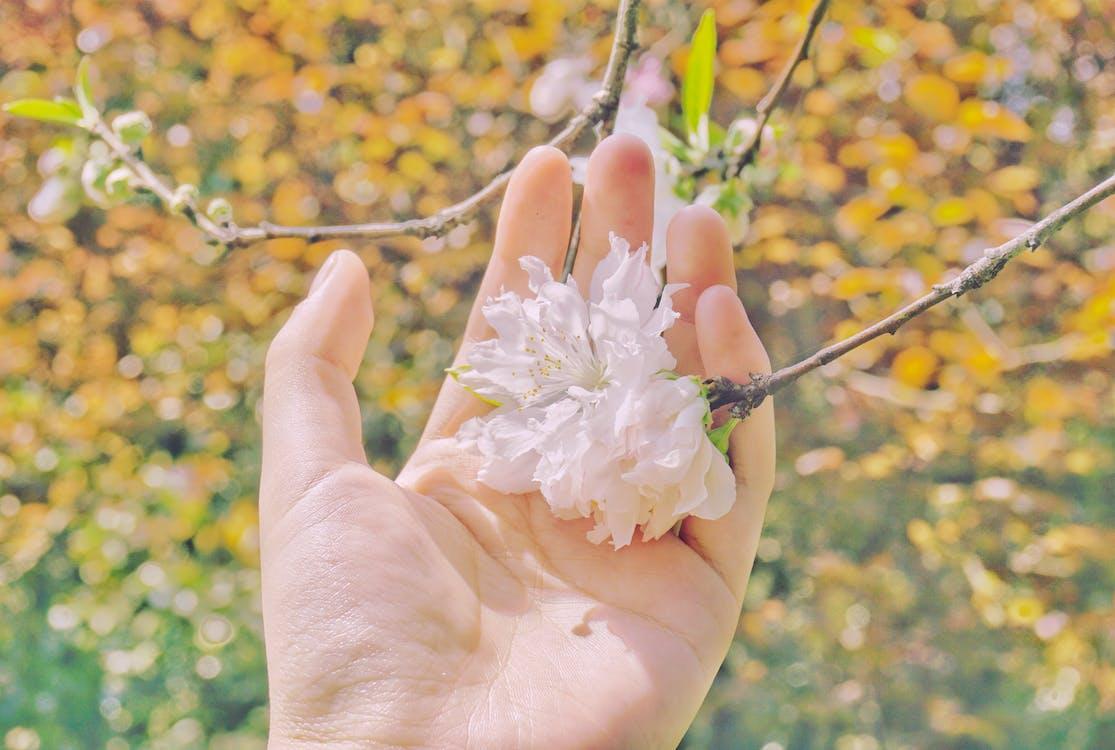 bloem, geel, hand