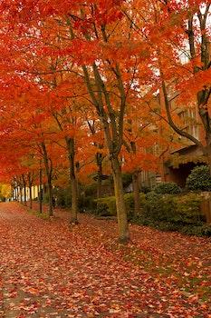 Orange Leafed Trees on Pathway