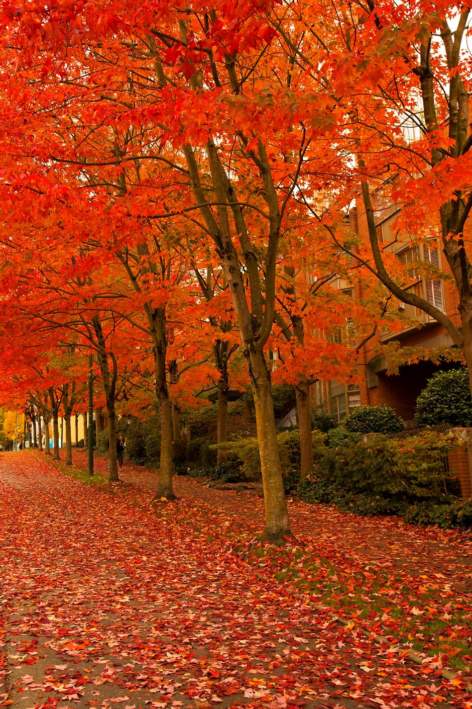 Orange Leafed Trees on Pathway