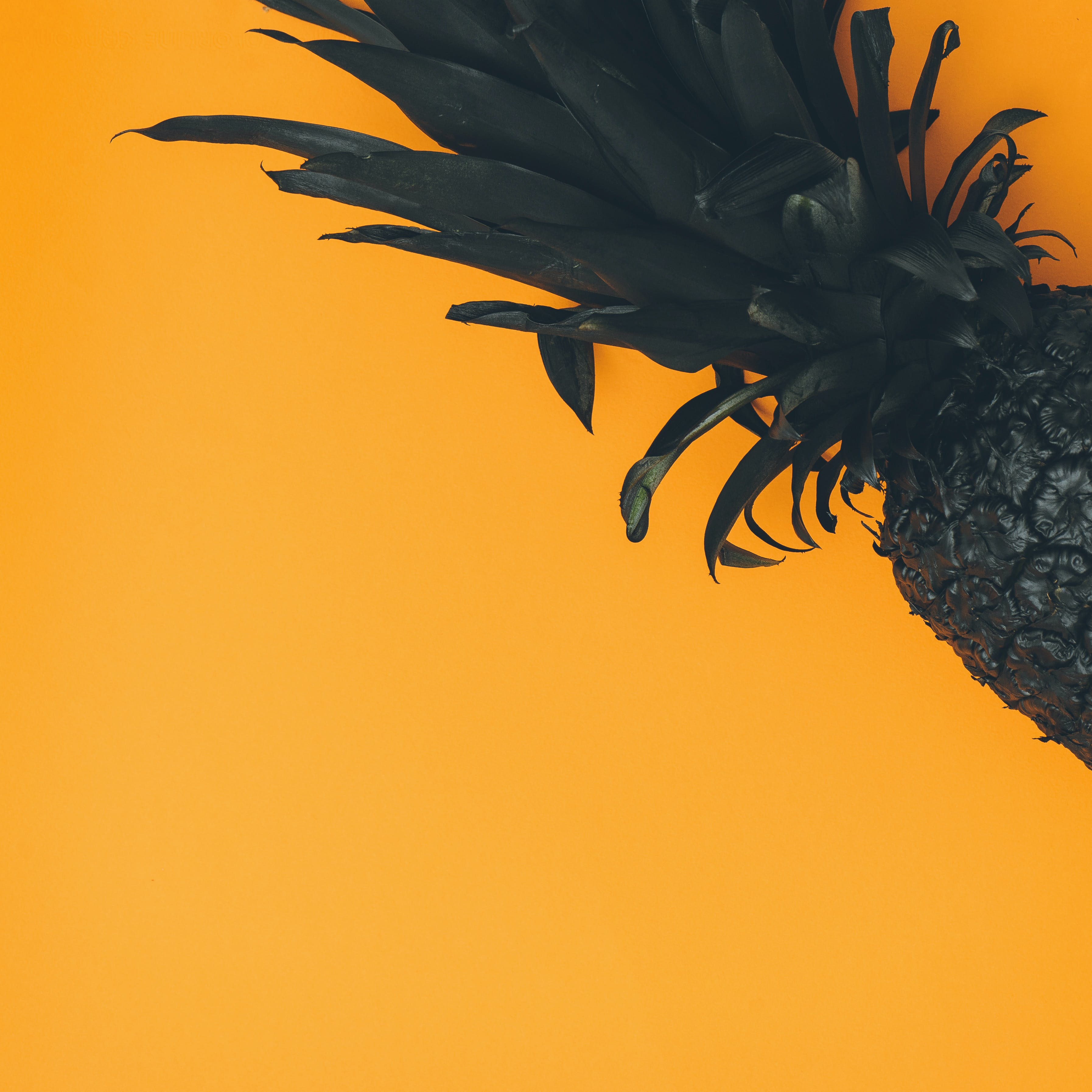 Free stock photo of art, orange, pineapple, black