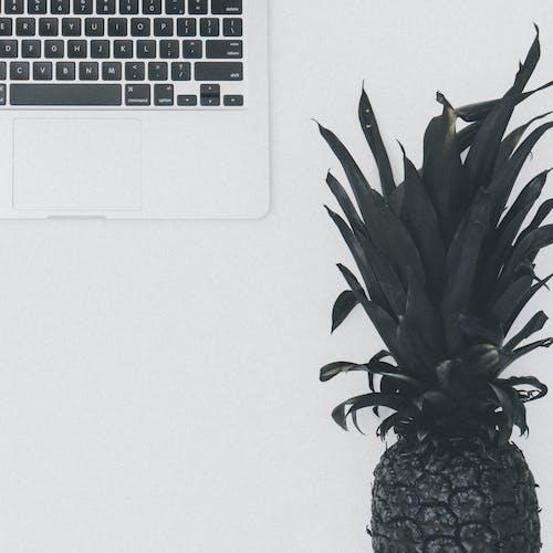 Бесплатное стоковое фото с copy space, ананас, белый фон, Искусство
