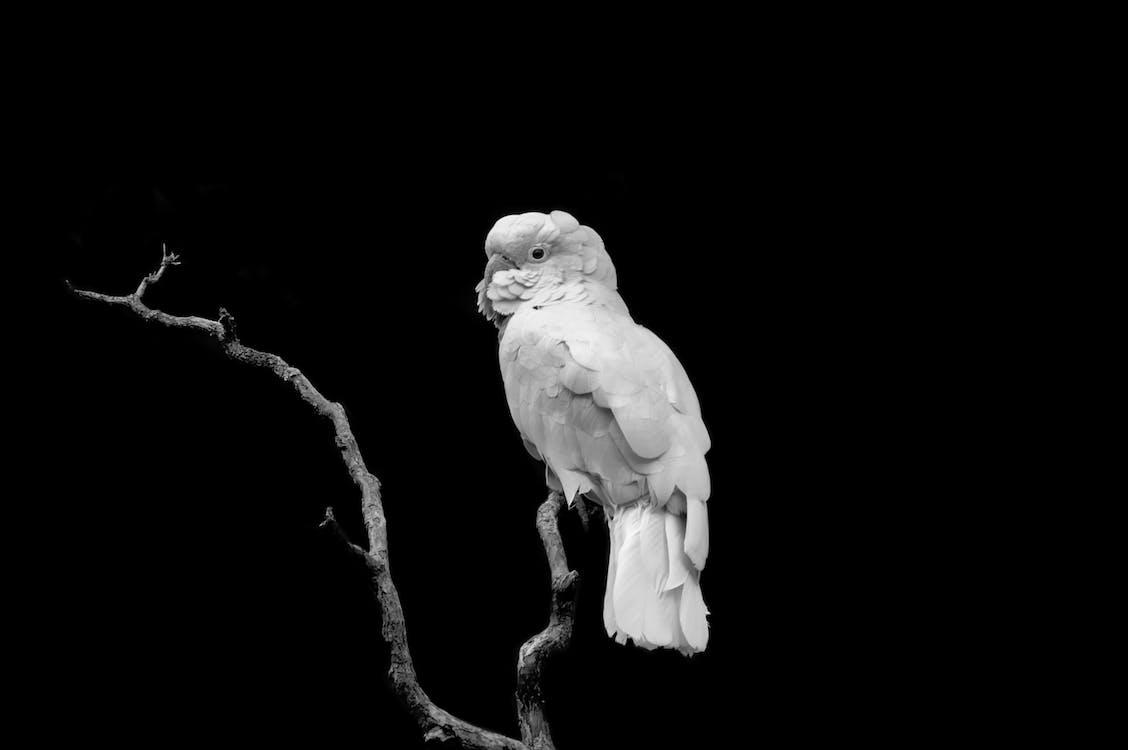 Bird Perching On The Tree
