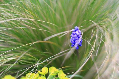 Foto profissional grátis de azul, borrado, bulbos, chartreuse