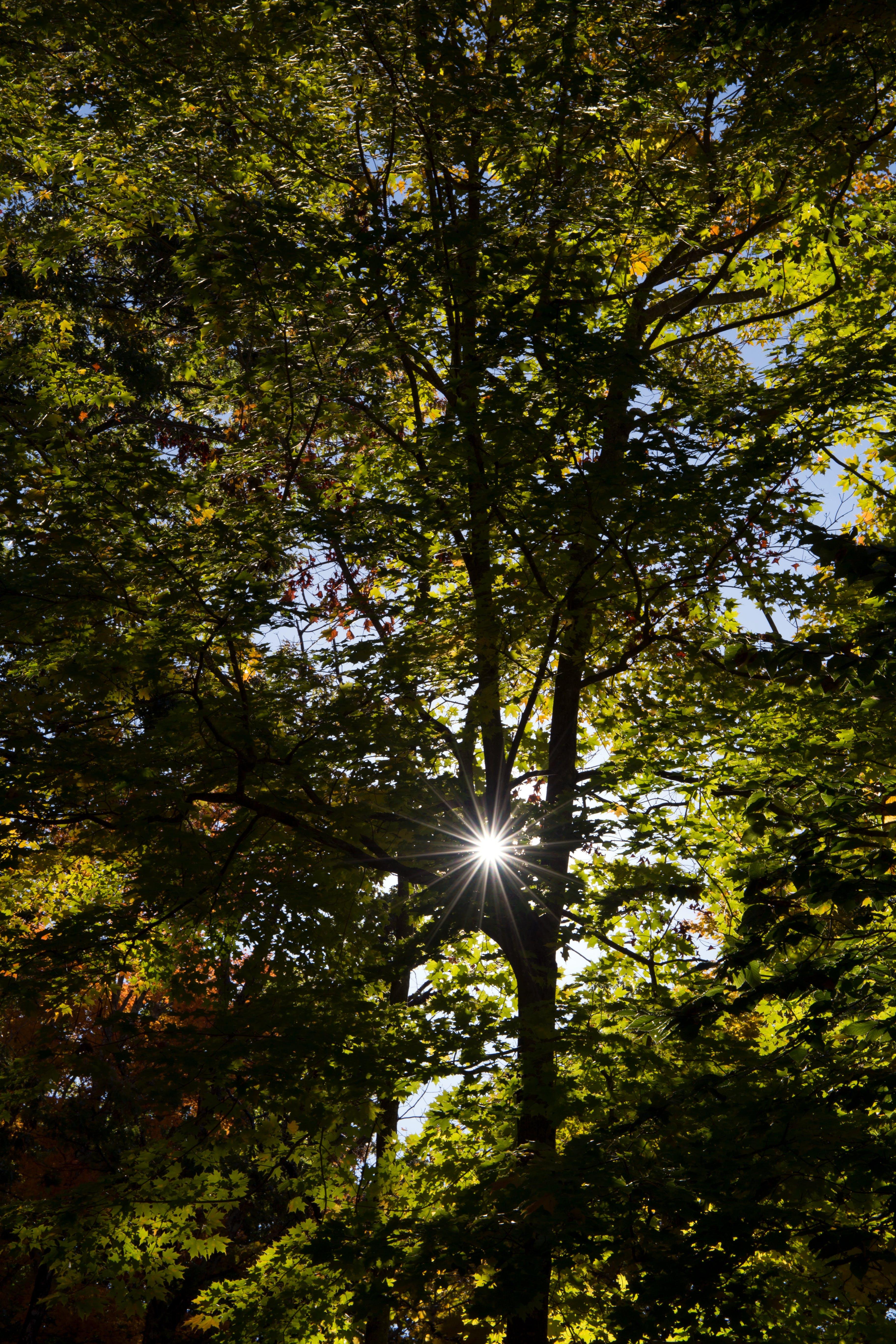 Immagine gratuita di alberi, ambiente, colore, foresta