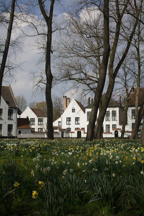 açık hava, ağaçlar, arazi, bahar içeren Ücretsiz stok fotoğraf